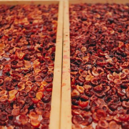 Raccolta ciliegie e laboratorio confettura